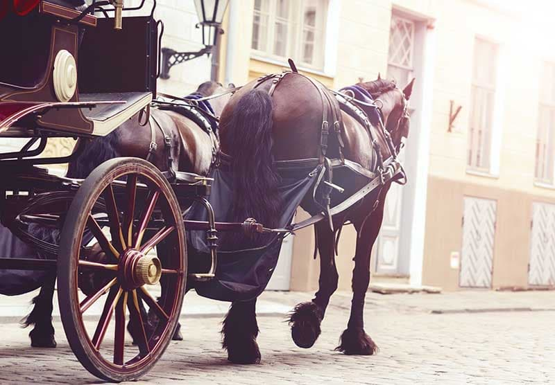 horse drawn hearse on funeral procession